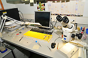 Insect collection and optical microscope