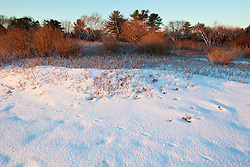 Red fox tracks in fresh snow on the New Hampshire coast in Odiorne State Park in Rye, New Hampshire.  Winter.