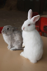 Rabbits sitting on a table