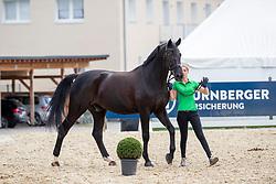 MÜLLER-LÜTKEMEIER Fabienne (GER), Fabregaz<br /> Balve - Longines Optimum 2019<br /> Vet-Check Dressurpferde Deutsche Meisterschaft<br /> 13. Juni 2019<br /> © www.sportfotos-lafrentz.de/Stefan Lafrentz