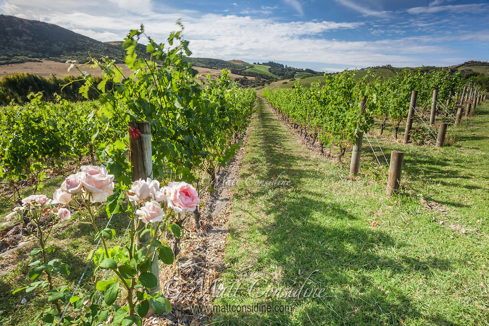 The pristine environment in New Zealand makes it an excellent place to create high quality wines. (Photo by Travel Photographer Matt Considine)