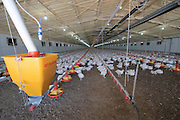 Automatic chicken feeding system in a free roaming coop Photograpjed in Kibbutz Maagan Michael, Israel