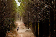 Mountain bike riders make their way through the Lebanon forest during the 2011 ABSA Cape Epic multi-day stage race. Image by Greg Beadle