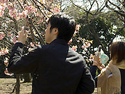 cell phone used as camera to take a picture of cherry blossom Shinjuku Gyoen Park Tokyo