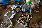 Pocos de Caldas_MG, Brasil...Plano de manejo das Reserva Particular do Patrimonio Natural (RPPN) em Pocos de Caldas, Minas Gerais...The Private Natural Heritage Reserve (RPPN) in Pocos de Caldas, Minas Gerais...Foto: JOAO MARCOS ROSA /  NITRO