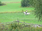 Den vita hästen