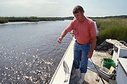 SHELLTOWN, MD, USA - 1997/09/25: A researcher for the Maryland Department of Natural Resources captures Menhaden fish for signs of the flesh eating Pfiesteria disease in the Pocomoke River along the Chesapeake Bay September 25, 1997 in Shelltown, Maryland. The outbreak caused a loss of $43 million dollars in fishing revenue and is believed to be caused by the runoff of chicken manure from farms in the area. (Photo by Richard Ellis)