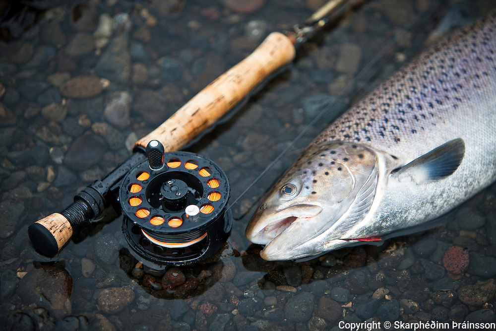 Trout fishing / Silungsveiði