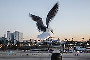 Sunrise at the pier Santa Monica, California