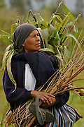 AN OLD FARMER WOMAN., .   The Hatun Luya is a festival celebrated every september 13th, where everyone from the surrounding areas comes together. During this festivity, you can witness demonstrations of popular customs.