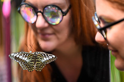 "© Licensed to London News Pictures. 05/09/2019. LONDON, UK. A staff member wearing kaleidoscopic glasses views a butterfly at a ""Butterfly Biosphere"" in Grosvenor Square, Mayfair.  Setup by Bompas and Parr in association with King's College London and Butterfly Conservation, the aim is to make visitors more aware of the importance of pollinators and the ecosytem that the capital's 50 species of butterfly need to thrive.  The biosphere is open 5 to 15 September. Photo credit: Stephen Chung/LNP"