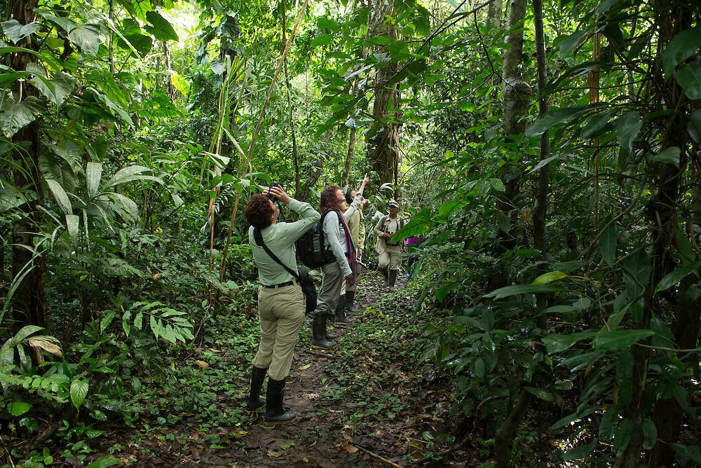 South America; Peru; Amazonia; Manu; National Park; UNESCO; World Heritage; group of tourist bird watching in jungle