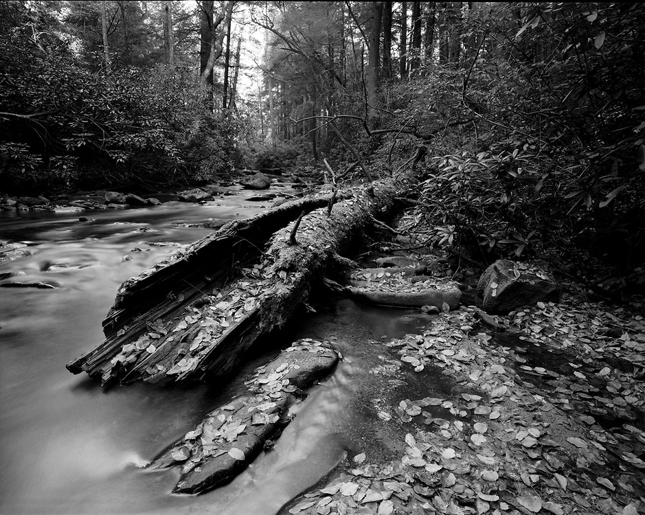 Noontootla Creek - North Georgia - Chattahoochee National Forest - Mayima 7II/43m lens/Ilford Film