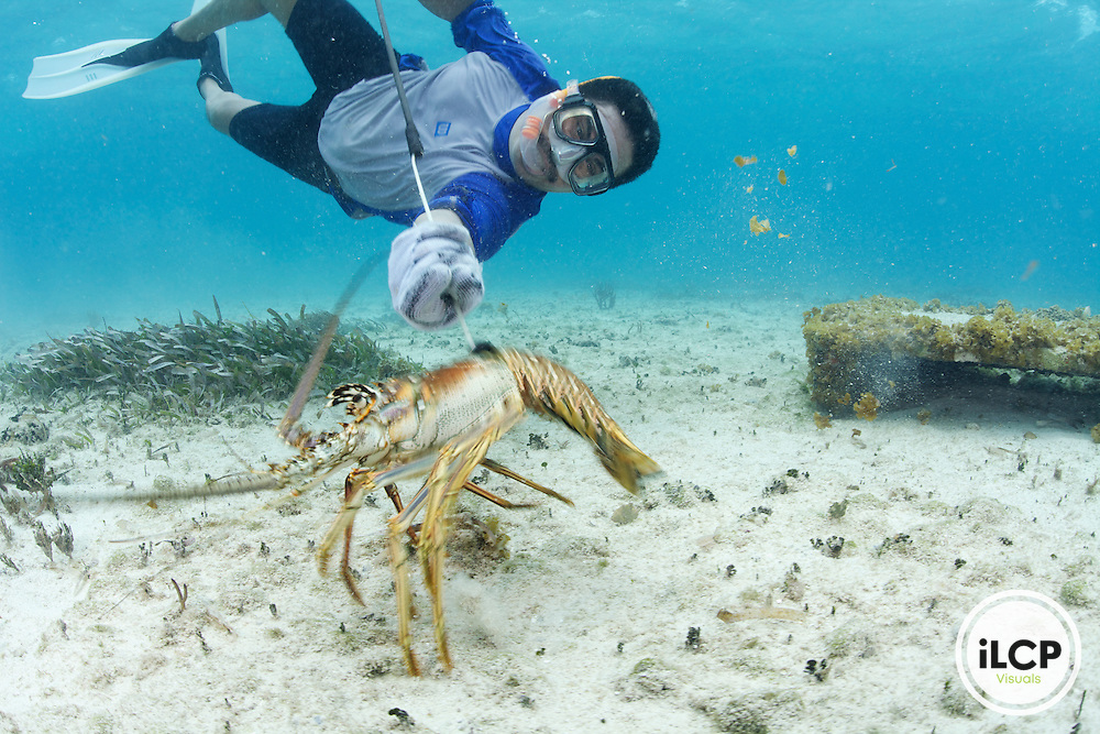 An artisanal or small-scale lobster fisherman free dives using a lasso's to catch the Caribbean Spiny Lobster. In the background is a 'Casitas Cubanas' a man-made shelter for the lobsters.  Sian Ka'an Biosphere Reserve; Punta Herrero, Mexico