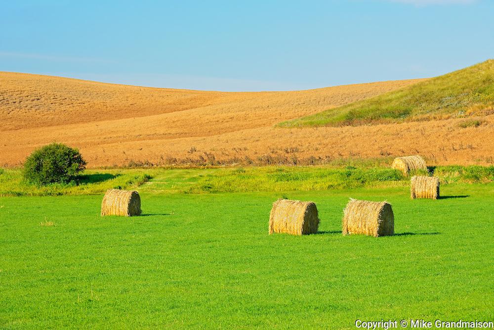 Bales and yellow peas<br /> Webb<br /> Saskatchewan<br /> Canada