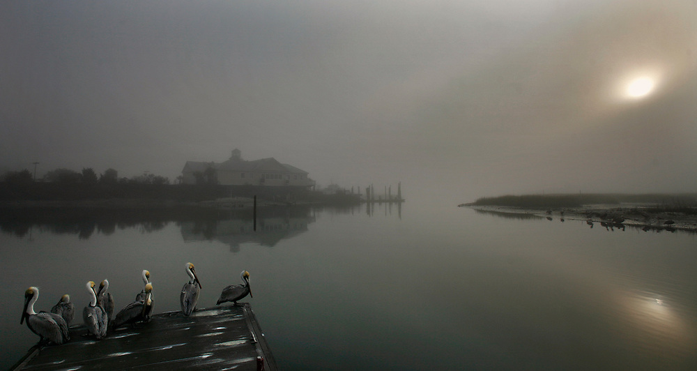 Foggy morning-- Pelicans sit on the dock on a foggy morning at the Murrells Inlet public boat landing in the marsh in Murrells Inlet.  Photo by Steve Jessmore sjessmore@thesunnews.com