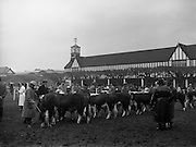 05/02/1957<br /> 02/05/1957<br /> 05 February 1957<br /> R.D.S. Bull show first day, in Ballsbridge, Dublin. bulls and owners in the enclosure at the show.