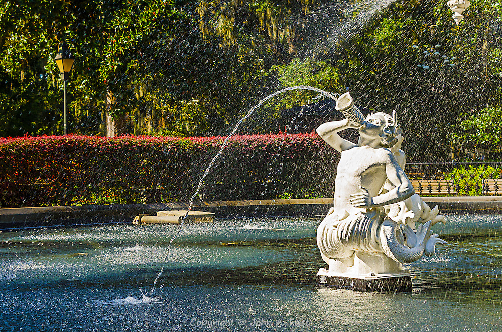 In one of the many beautiful parks in Savannah, we came upon a large fountain with several of these creatures serenading us.  On a hot day it cooled things off a bit