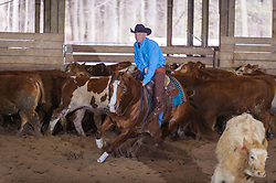 April 29 2017 - Minshall Farm Cutting 1, held at Minshall Farms, Hillsburgh Ontario. The event was put on by the Ontario Cutting Horse Association. Riding in the 2,000 Limited Rider Class is David Hamilton on Cat Powered owned by the rider.