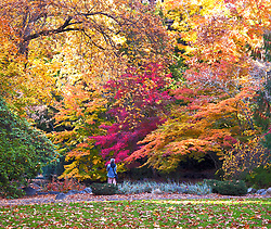 An early morning walker stops to take in the radiant fall color of Lithia Park, Ashland, Oregon.