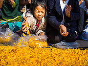 "02 JANUARY 2015 - KHLONG LUANG, PATHUM THANI, THAILAND: A child places marigolds on the monks' footpath at Wat Phra Dhammakaya on the first day of the 4th annual Dhammachai Dhutanaga (a dhutanga is a ""wandering"" and translated as pilgrimage). More than 1,100 monks are participating in a 450 kilometer (280 miles) long pilgrimage, which is going through six provinces in central Thailand. The purpose of the pilgrimage is to pay homage to the Buddha, preserve Buddhist culture, welcome the new year, and ""develop virtuous Buddhist youth leaders."" Wat Phra Dhammakaya is the largest Buddhist temple in Thailand and the center of the Dhammakaya movement, a Buddhist sect founded in the 1970s.   PHOTO BY JACK KURTZ"