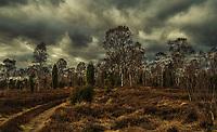 Nature Heide