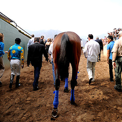 American Pharoah makes his way to the track as fans cheer. It is his first public debut at Santa Anita since becoming the first racehorse to win the Triple Crown after winning the Kentucky Derby, Preakness and Belmont Stakes at Santa Anita Park in Arcadia, Calif., on Saturday, June 27, 2015.<br /> (Photo by Keith Birmingham/ Pasadena Star-News)