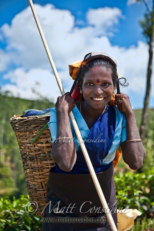 Tea pickers dress very neatly and with richly colored saris and jewelry.  The stick is used to ensure the tops of the tea plants are picked to the same level.<br /> (Photo by Matt Considine - Images of Asia Collection)