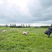 Nederland Delft 17-09-2010 20100917     A4 Delft - Schiedam wordt definitief verlengd,  er  is begin deze maand officieel besloten tot de aanleg van het stuk snelweg waarover zo'n vijftig jaar is gesproken. Natuurgebied dat in de toekomst zal moeten wijken na het doortrekken van de A4, vrouw laat haar honden uit. Rijkswaterstaat en het ministerie van VWS hebben dat laten weten.Over de nieuwe verkeersader wordt al decennialang gesteggeld, vooral omdat de weg het natuurgebied Midden-Delfland doorboort...De zeven kilometer asfalt tussen Delft en Schiedam doorkruist straks verdiept of via een tunnel het natuurgebied tussen de twee steden. Het belangrijkste pluspunt is dat de A13 wordt ontlast. Op rijksweg A13 staat dagelijks de voor de economie schadelijkste file van Nederland. Met het project A4 Delft-Schiedam willen lokale en regionale overheden en het Rijk de problemen rond bereikbaarheid en leefbaarheid op en rond de A13 en de A4 Delft-Schiedam oplossen. Midden Delftland. , recreatie, recreeren, regionale overheden, relax, relaxed, relaxen, relaxing, rijbaan, rijbanen, route, ruimte, ruimtelijk, ruimtelijke, ruimtelijke omgeving, ruimtelijke ordening, Ruimtelijke plannen, ruimtelijke planning, ruimtelijke visie, ruraal, rurale omgeving, rustiek, rustieke, rustieke omgeving, rustig, rustige, space, spare time, spoor, stedelijke vernieuwing, stil, streekplan, sunny, terrein, The Netherlands Holland Nederland, toekomst, toekomstige plannen, toekomstplannen, tracé, traject, uitgestrektheid, verbinding, verbindingen, vergezicht, vergezichten, verkeer en vervoer, verkeer en waterstaat, verkeersnet, verlengen, vernieuwing, vervoer, vewezenlijken, vrije tijd, vrouw, vrouwen, walking the dog, wandelen, wegenbouw, wegenbouwplanologie, wegennet, wegnet, wegverbinding, wei, weide, weidegang, weiland, wijds, wijdsheid