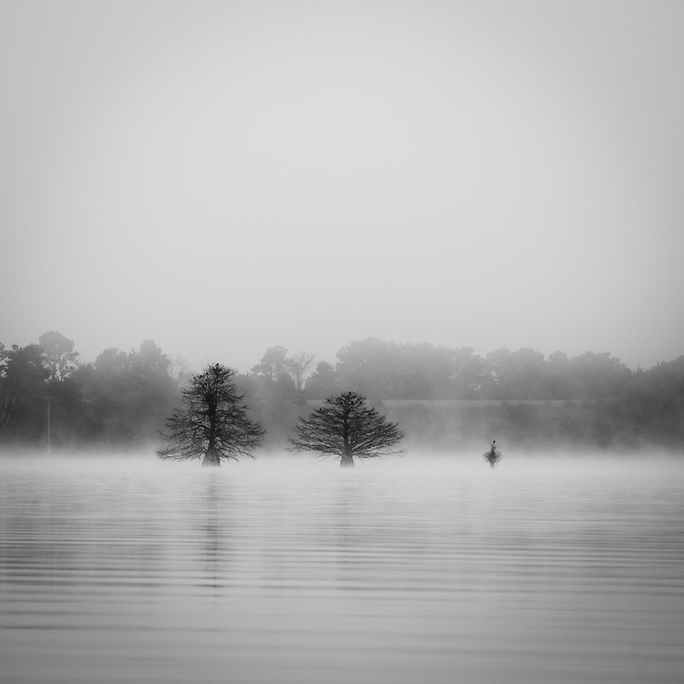 Trees in Lake Eufaula<br /> Quitman, GA and Eufaula, AL State Line