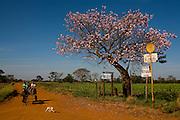 Uberaba_MG, Brasil...Paisagem as margens da BR 262 em Uberaba, Minas Gerais...The landscape next to the highway BR 262 in Uberaba, Minas Gerais...Foto: LEO DRUMOND / NITRO