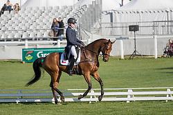 Prihoda Jr Miloslav, CZE, Ferreolus Lat<br /> World Championship Young Eventing Horses<br /> Mondial du Lion - Le Lion d'Angers 2016<br /> © Hippo Foto - Dirk Caremans<br /> 20/10/2016