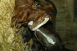 Birth<br /> Kieldrecht 2000<br /> Photo© Dirk Caremans