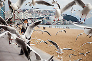 A man is feeding seagulls at Haeundae Beach in Busan. Busan is a harbour city and  Korea's second largest city after Seoul with a population of around 3.6 million.