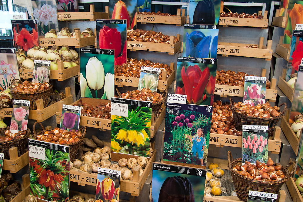 Flowers in many  forms, but primarily tulips, are a colorful hallmark of Amsterdam.