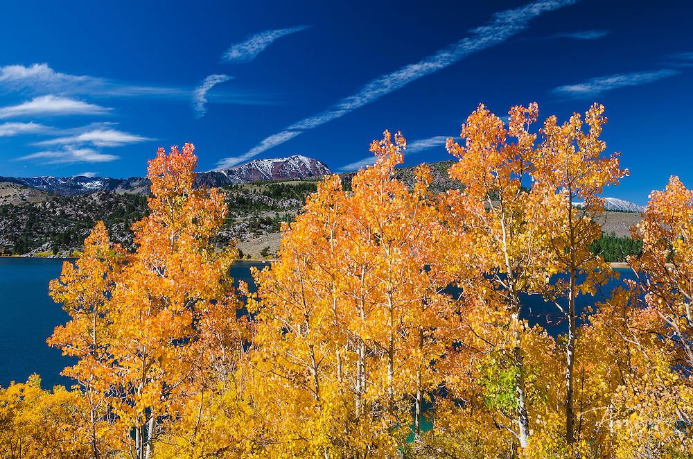 Golden fall aspen at June Lake, Inyo National Forest, Sierra Nevada Mountains, California USA