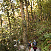 The Rob Roy Glacier Track leads hikers up a gorge into a beech forest with views of the Matukituki River and the Matukituki Valley near Wanaka on the South Island of New Zealand.