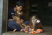 Bornean Orangutan<br /> Pongo pygmaeus<br /> Caretaker with two year old infants bottle-feeding<br /> Orangutan Care Center, Borneo, Indonesia<br /> *No model release available - for editorial use only