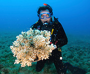 A scuba diver poses for the camera with a coral Photographed in the red sea Aqaba, Jordan