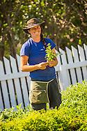 chatfield CSA crew harvest