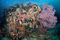 Colorful Bommie of Hard and Soft Corals.Shot in West Papua Province, Indonesia