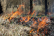 roadside grass burning