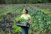 Farm Girl Farm CSA, sustainable community supported agriculture. Pick-up day, harvesting produce for distribution.