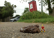 Making a mountain out of a molehill: The man who makes little people look like they're taking on big tasks<br /> <br /> An artist is making a big impression with his tiny pieces of art. <br /> Roy Tyson specialises in creating unique images and installations using miniature figures. <br /> Often he uses everyday props and taxidermy to create a humourous scene designed to be fun and <br /> intriguing.<br /> <br /> In one piece, tiny forensic officers examine cigarette butts while in another fishermen cast their lines into a drain. <br /> All of the miniature figures, affectionately known as Roy's People, are hand painted to give them personality and charm.<br /> <br /> The 26-year-old, from Stanford-le-Hope, in Essex, buys the figures and paints them before taking their pictures. <br /> The pictures have been displayed in exhibitions and are on sale.<br /> <br /> He recently told the Essex Echo that street art is his biggest influence. He said: 'I like Banksy and the way he uses street art. <br /> 'For me, the street art I do is just looking at things that are every day and seeing how little people can be used to make these things look funny.<br /> 'It makes objects look different, it's a mixture between things that are going on in the world and things that just pop into my head.'<br /> ©Roy's People/Exclusivepix