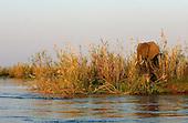 Zambia: The Lower Zambezi National Park