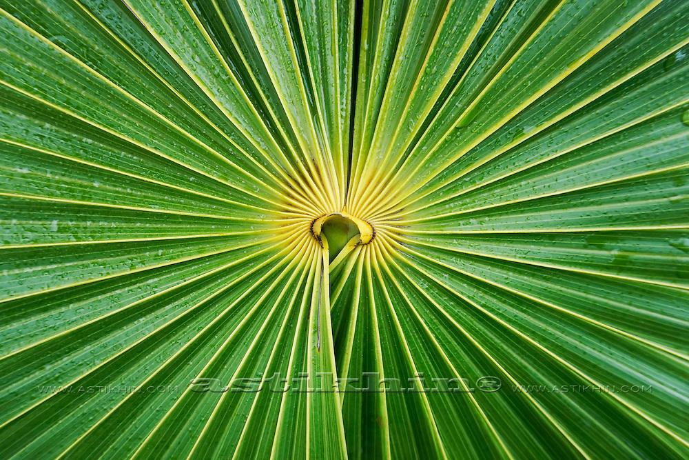 Symmetry on green.