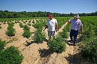 Broadway Hemp's Ryan Patterson (left) shows Harnett County extension agent Brian Parrish around his Harnett County hemp farm.