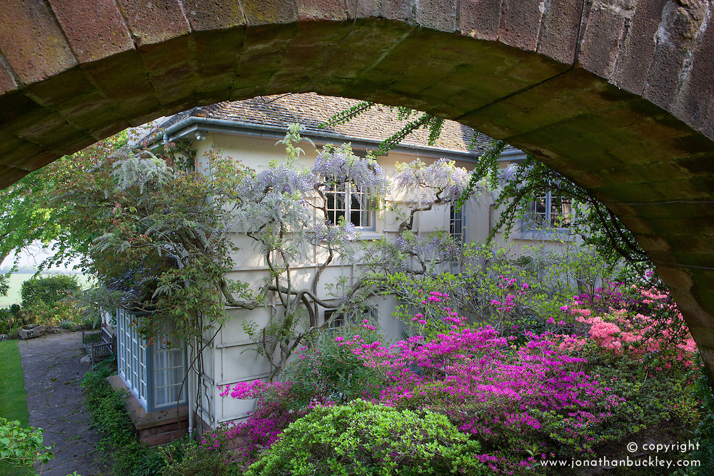 Azaleas and wisteria framed by stone arch near the house at Greencombe Gardens, Somerset