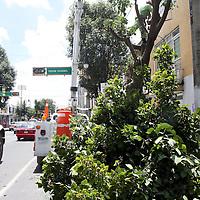 TOLUCA, México.- Personal del ayuntamiento de Toluca se encuentra podando los árboles ubicados en la Avenida Morelos para evitar accidentes, ya que las ramas de la mayoría de ellos están interfiriendo con cables de alta tensión que pasan por este lugar. Agencia MVT / Crisanta Espinosa. (DIGITAL)