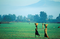 Nepal - Region du Teraï - Ethnie Tharu  - Travaux des Champs